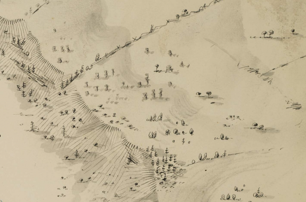 Trees from Rexford map